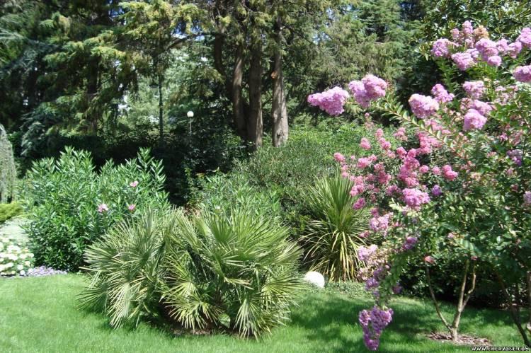 Екзотичні рослини крим 2009